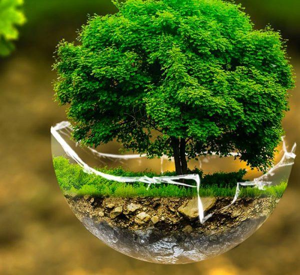 tree environment